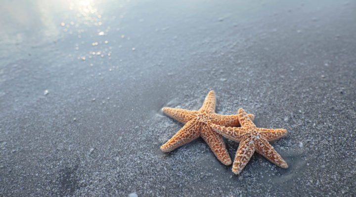 2 starfish on the beach